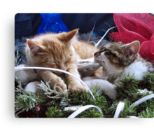 Venus & Di Milo ~ Contemplation ~ Cute Winter Kitty Cat Kittens Canvas Print