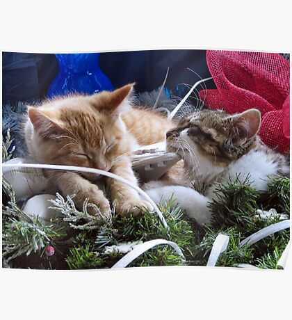 Venus & Di Milo ~ Contemplation ~ Cute Winter Kitty Cat Kittens Poster