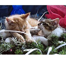 Venus & Di Milo ~ Contemplation ~ Cute Winter Kitty Cat Kittens Photographic Print