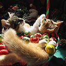 Venus &amp; Di Milo ~ Serenity ~ Christmas Kittens by Chantal PhotoPix