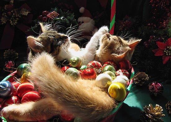Venus & Di Milo ~ Serenity ~ Christmas Kittens by Chantal PhotoPix