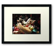 Venus & Di Milo ~ Serenity ~ Christmas Kittens Framed Print
