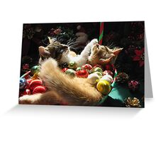 Venus & Di Milo ~ Serenity ~ Christmas Kittens Greeting Card
