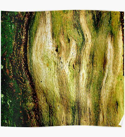 Green Bark Poster