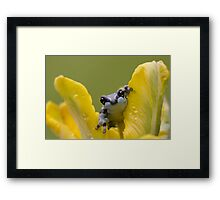 Milk frog in spring flowers Framed Print
