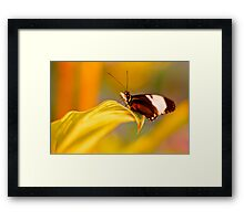 Luminous Yellow Flower with Gracious Butterfly  Framed Print