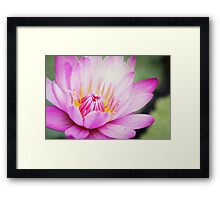 : Lotus : Framed Print