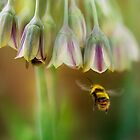 Busy bees by Mandy Disher