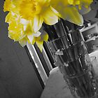 Yellow Daffodils by kersey