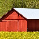 Red Barn In Goldenrod by Sheryl Gerhard
