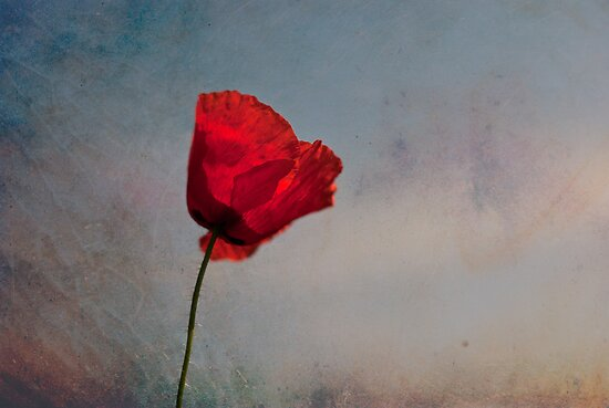 Poppy  by Karen Havenaar