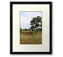 Kruger wildlife Framed Print