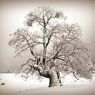 Oak In Winter  by Rany Lutz