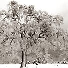 Frosty Oak by Rany Lutz