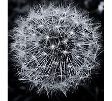 Dandelion Detail Photographic Print