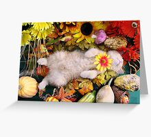 Di Milo ~ Fall Harvest ~ Cute Kitty Cat Kitten in Fall Colors Greeting Card