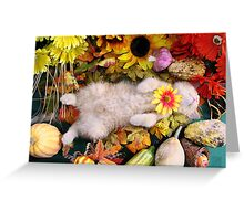 Di Milo ~ Fall Harvest ~ Cute Kitty Cat Kitten in Fall Colors Greeting Card
