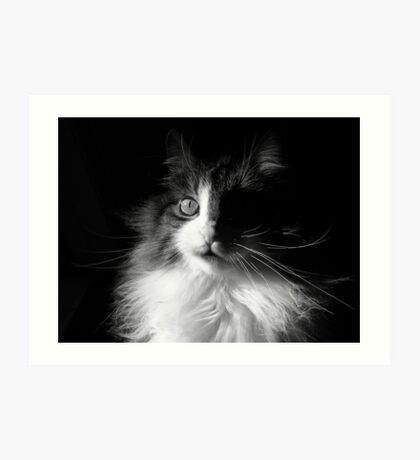 Whiskers ~  Shadows & Light ~ Captivated Cat Art Print