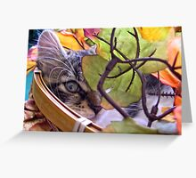 Venus ~ Cute Kitty Cat Kitten ~ One Eye Peeking through Fall Leaves ~ Autumn Colors Greeting Card