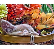 Di Milo ~ Cute Kitty Cat Kitten in Decorative Fall Colors Photographic Print