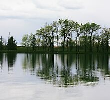 Park Lake Reflection by Alyce Taylor