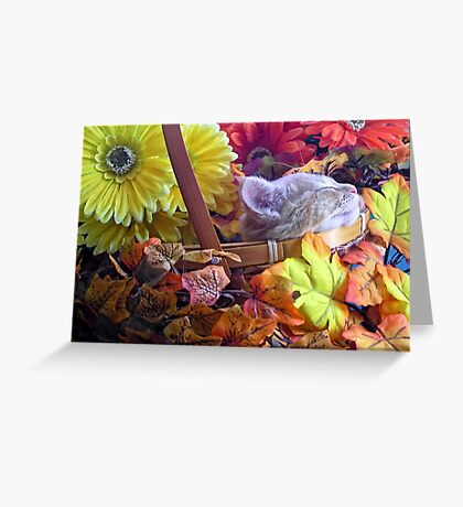 Di Milo ~ Chin-up ~ Fall Kitty Cat Kitten in a Basket of Fall Flowers Greeting Card