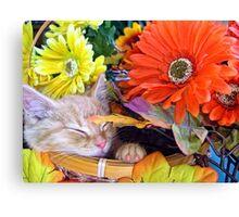Di Milo ~ Cute Kitty Cat Kitten in Decorative Fall Colors Canvas Print