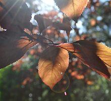 see through the sun by Elizabeth Fenton