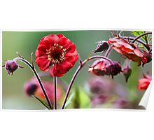 Geum Blossoms - Flame of Passion Poster