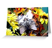 Venus ~ My World has turned Upside Down ~ Fall Kitten Greeting Card