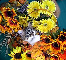 Venus ~ Cute Kitty Cat Kitten in Decorative Fall Colors by Chantal PhotoPix