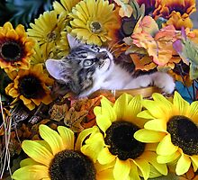 Venus ~ Serenity ~ Fall Kitty Cat Kitten with Sunflowers by Chantal PhotoPix