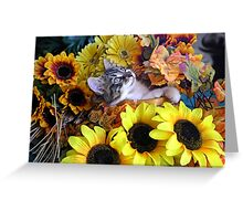 Venus ~ Serenity ~ Fall Kitty Cat Kitten with Sunflowers Greeting Card