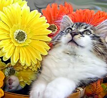 Venus ~ Cute Kitty Cat Kitten in Decorative Fall Flowers by Chantal PhotoPix