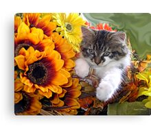 Venus ~ Cute Kitty Cat Kitten in Fall Sunflowers and Gerberas Canvas Print