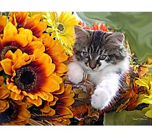 Venus ~ Cute Kitty Cat Kitten in Fall Sunflowers and Gerberas Photographic Print