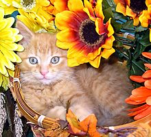 Di Milo ~ Sunflower Basket ~ Cute Kitty Cat Kitten by Chantal PhotoPix