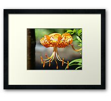 Floral art Orange Tiger Lily Flowers Lilies Framed Print