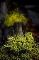 Lichen by Pam Hogg