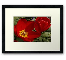 two 'lips opened and closed Framed Print