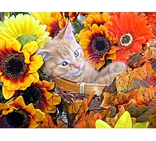 Di Milo ~ Cute Kitty Cat Kitten in Decorative Fall Flowers Photographic Print