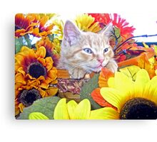 Di Milo ~ Cute Kitty Cat Kitten in Decorative Fall Colors Canvas Print