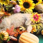 Di Milo ~ Flower Child ~ Kitty Cat Kitten in Fall Colors by Chantal PhotoPix