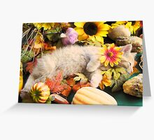 Di Milo ~ Flower Child ~ Kitty Cat Kitten in Fall Colors Greeting Card