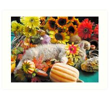 Di Milo ~ Kitty Cat Kitten Sleeping ~ Fall Harvest w/ Gourds & Pumpkins Art Print