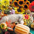 Di Milo ~ Kitty Cat Kitten Sleeping ~ Fall Harvest w/ Gourds &amp; Pumpkins by Chantal PhotoPix