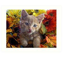 Di Milo ~ Perplexed ~ Fall Kitten Art Print