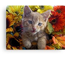 Di Milo ~ Perplexed ~ Fall Kitten Canvas Print