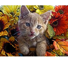 Di Milo ~ Perplexed ~ Fall Kitten Photographic Print