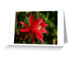 Rat Tail Cactus in Bloom Greeting Card